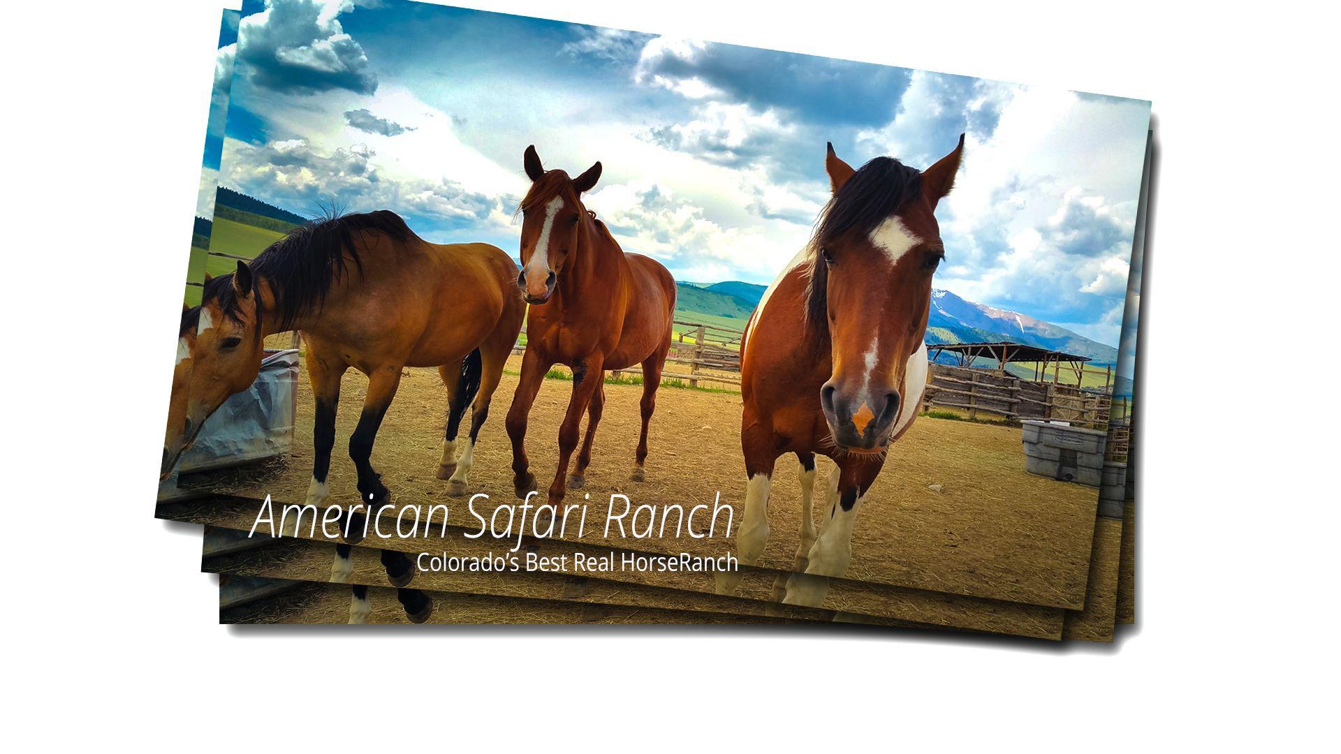 American Safari Ranch Horses Front Page